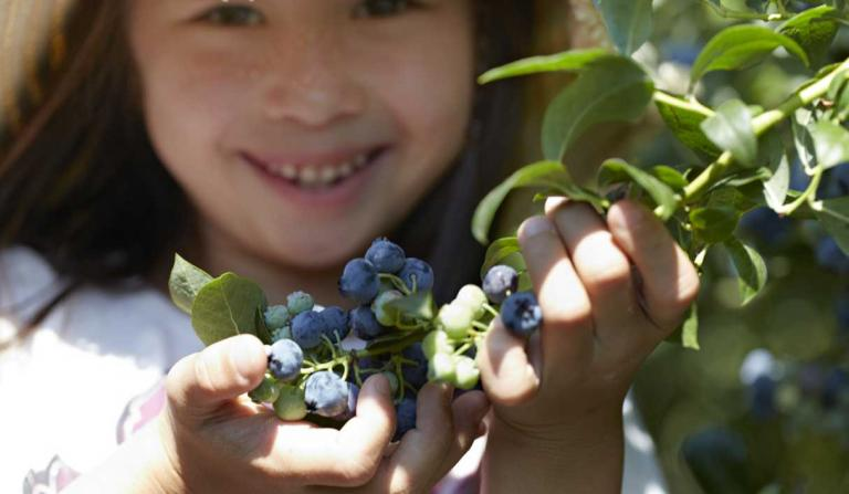 young girl picking blueberries