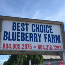Best Choice Blue Berry Farm